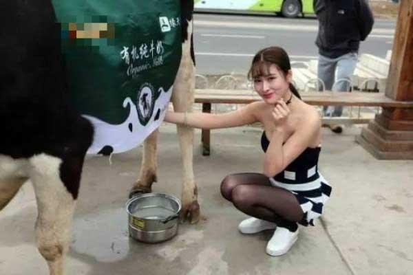 性感黑丝妹街头牵奶牛现场挤奶宣传有机概念