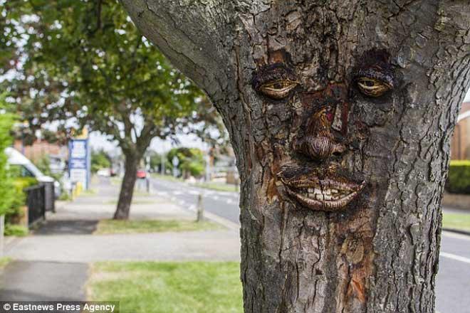 英国惊现人脸树,五官面貌栩栩如生