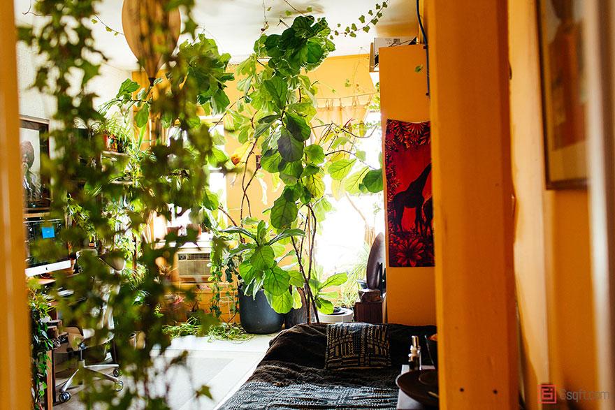 城市田园:500棵植物将公寓变成绿色丛林3