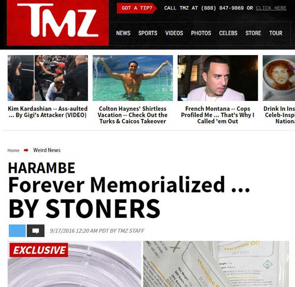 TMZ奇异新闻,名人明星的搞笑故事:TMZ Weird News