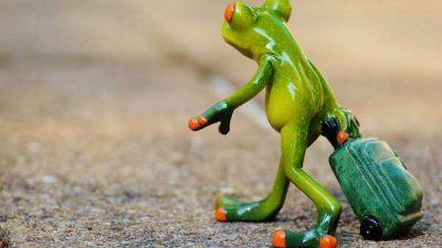 frog-likai.jpg
