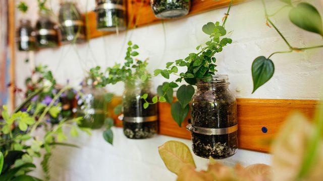 城市田园:500棵植物将公寓变成绿色丛林