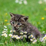 如何遛猫?带猫咪散步是个复杂的实现过程